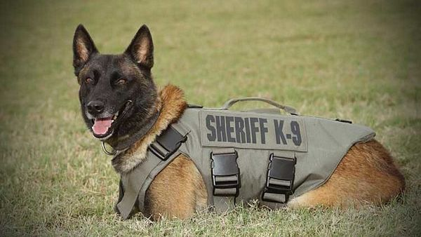 Detection Dogs Services